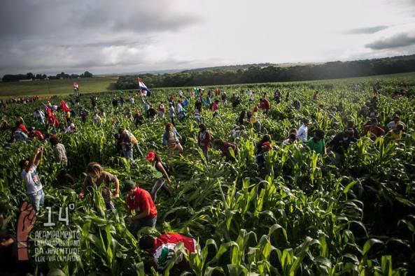 Jovens denunciando plantação de milho transgênico. Foto: Mídia NINJA
